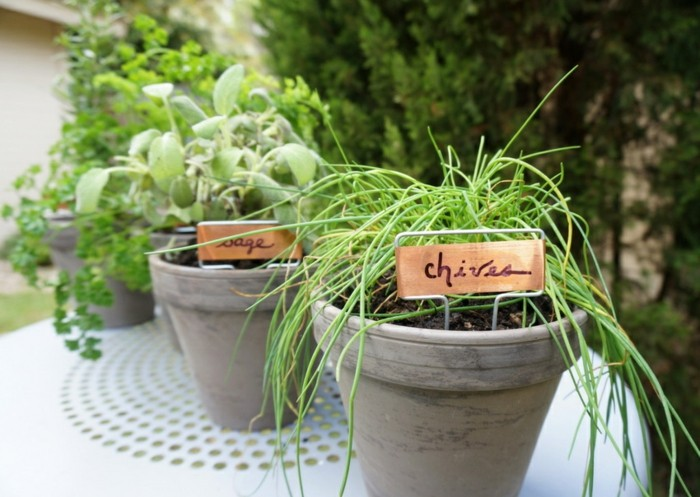 hierbas aromaticas detalles alineadas macetas