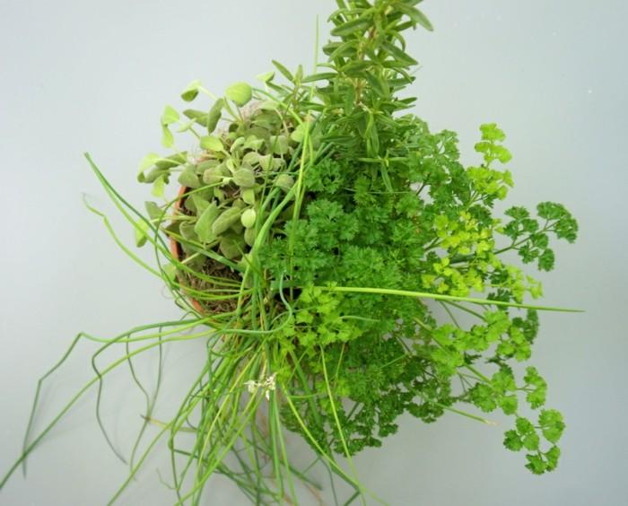 hierbas aromaticas detalles mesa comcepto variantes