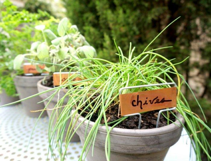 hierbas aromaticas detalles mesas especiales pinos