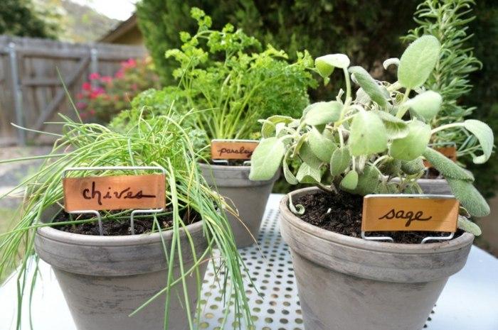 hierbas aromaticas detalles nombres sencillos