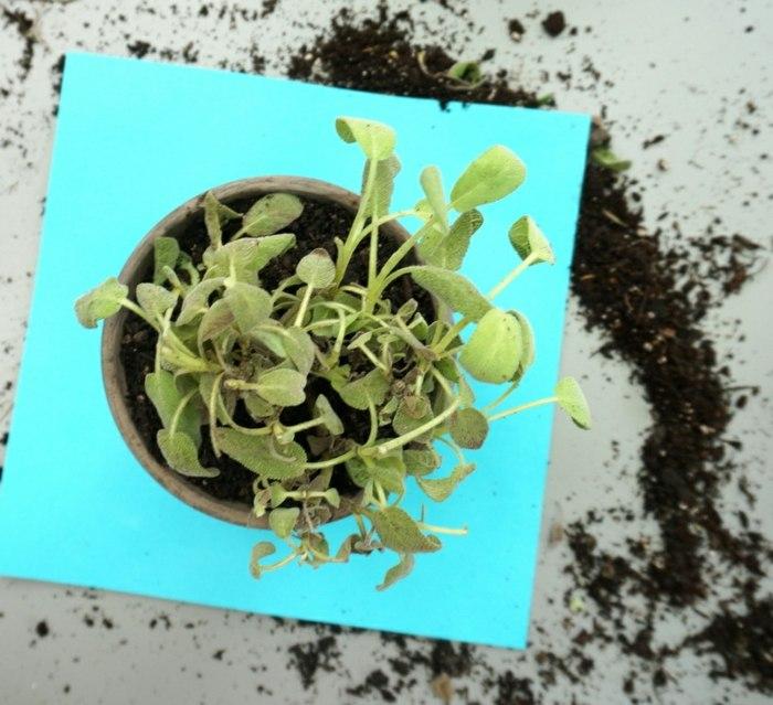 hierbas aromaticas detalles superiores conceptos presentes