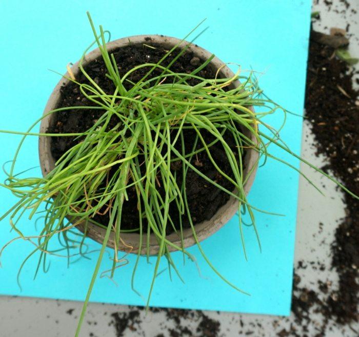 hierbas aromaticas divisiones salas salas