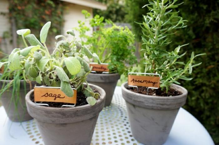 hierbas aromaticas funcionales colores