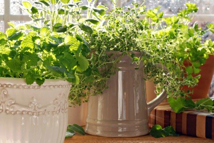 plantas interiores salones verdes salas