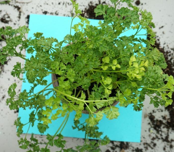 hierbas aromaticas plantaciones salas papeles