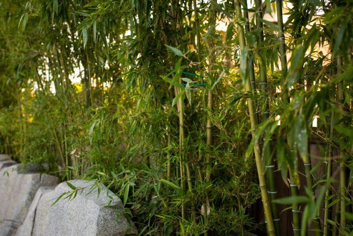 ideas bambu concreto salas externas colores