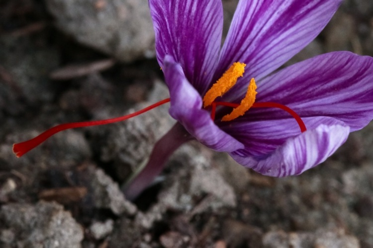 imagen flor vista flor cerca