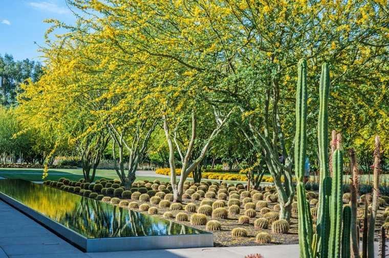 jardin estanque agua árboles cactus