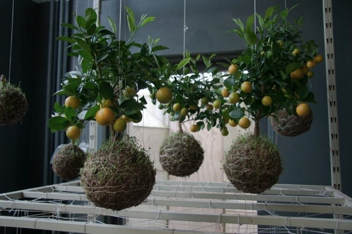 jardines creatividad detalles suelos frutas ideas