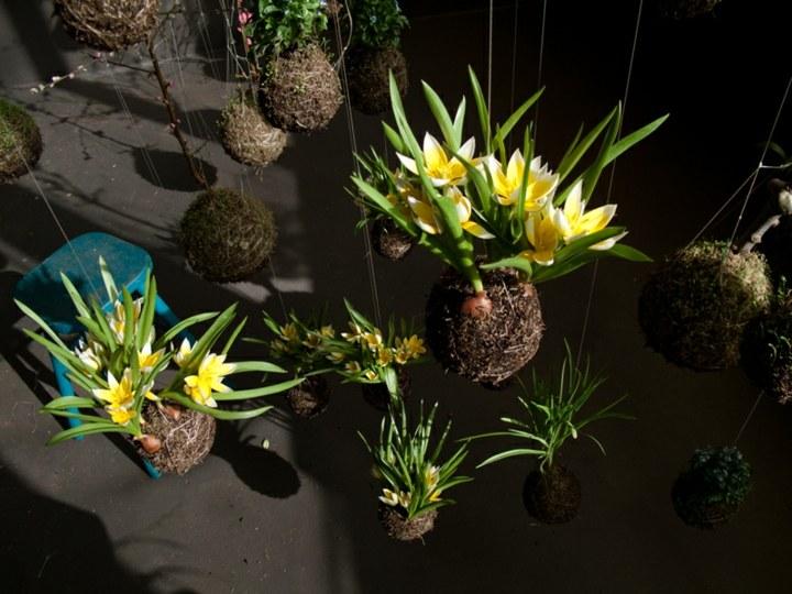 jardines creatividad modelos color amarillo