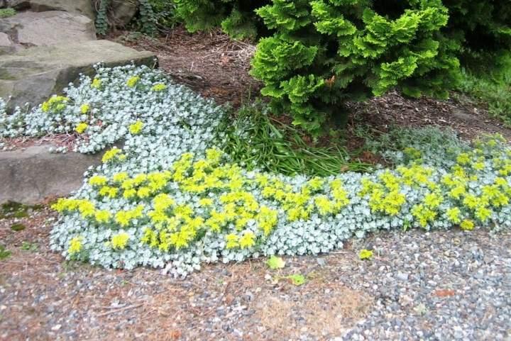 jardines mantenimiento salones flores filtros