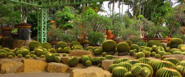 jardines bonitos decorados cactus