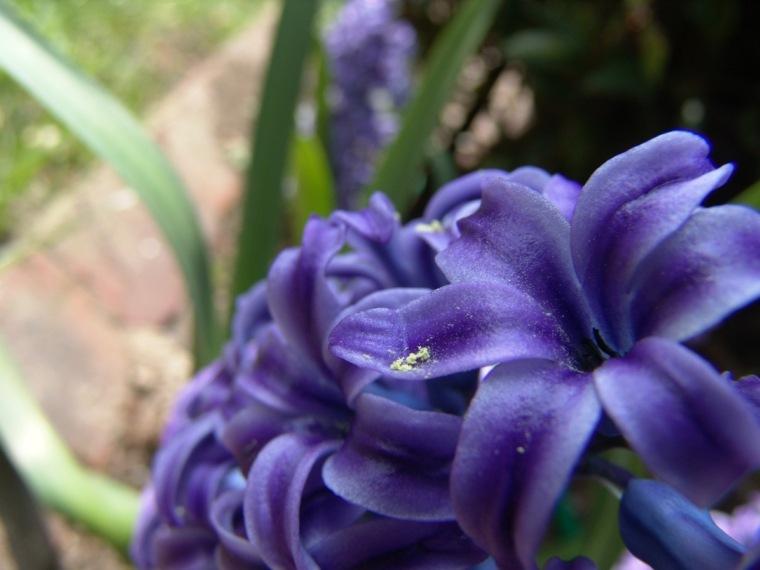 pretty purple lilac flower