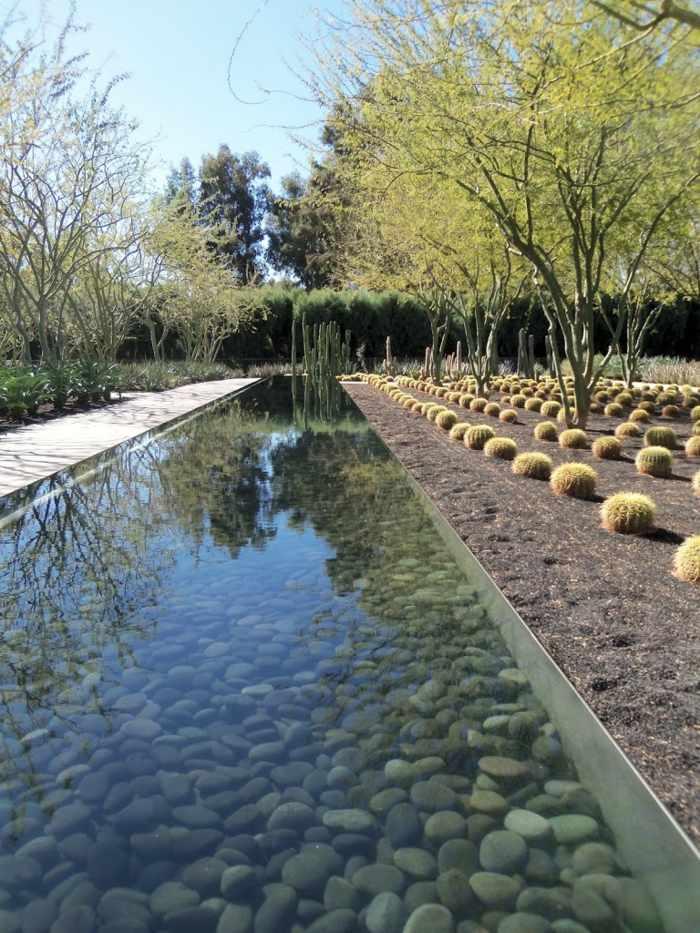 lineas cactus plantas suelos agua lineas