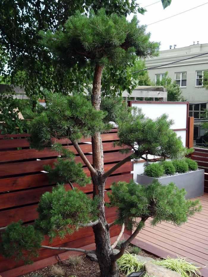 listones madera elecciones muebles ambientes