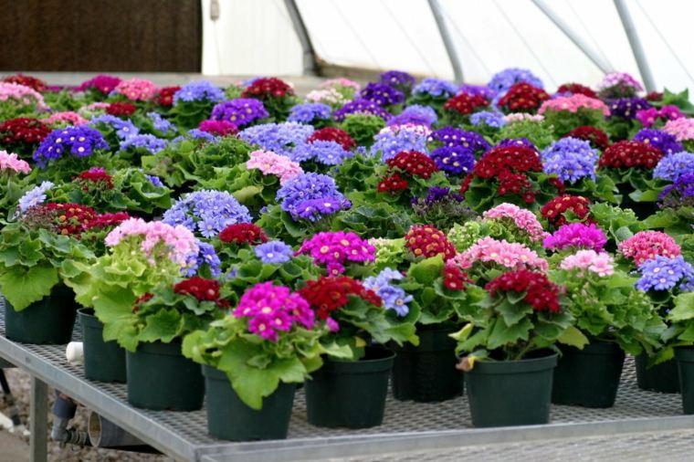 Marzo c mo recibir a la primavera en nuestro jard n for Plantas en macetas