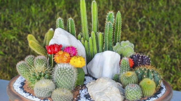 mini jardines cactus bonitos flores