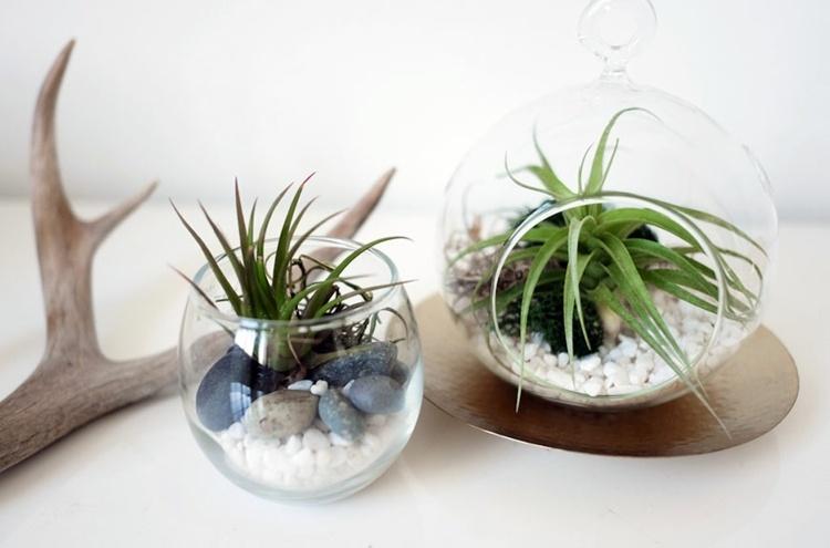 mini terrarios vasos vidrio