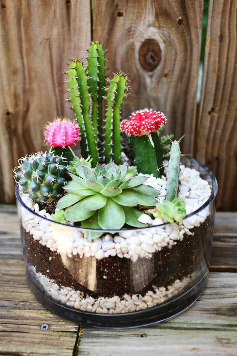 mini jardin plantas cactus