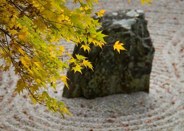 modelo otoño conciertos sentidos vegetacion