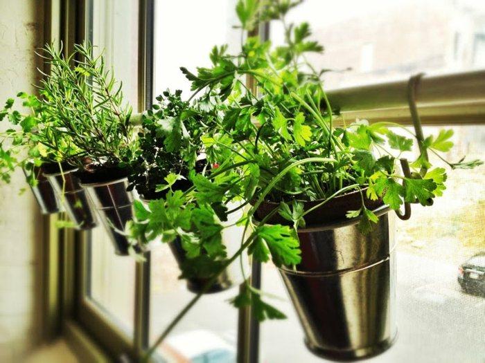 opciones hierbas jardin vertical barandilla macetas ideas