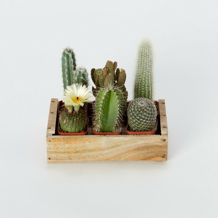 estupendo diseño mini jardín