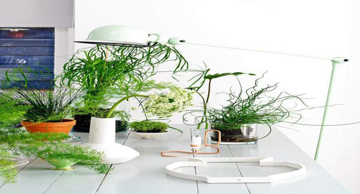 Plantas de interior ideas diy pr cticas y decorativas for Adornos para plantas con llantas