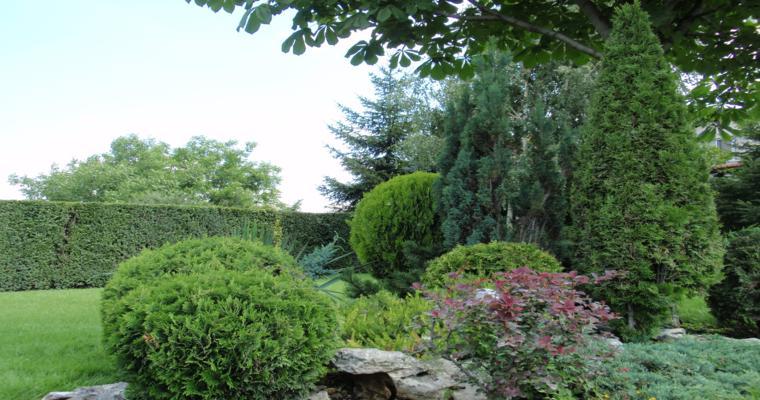 decoración jardines arbustos grandes
