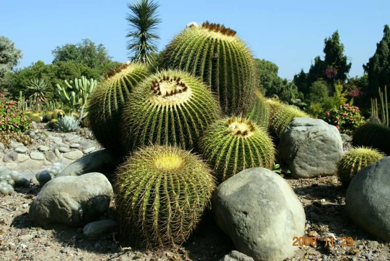 original foto rocalla grande cactus