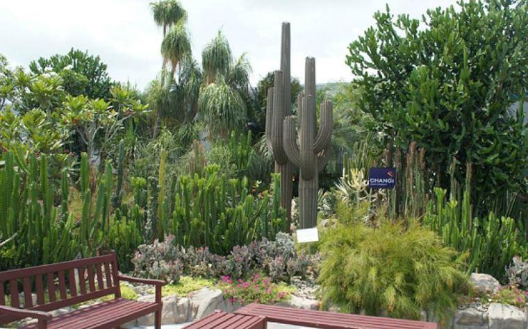 original jardin cactus altos