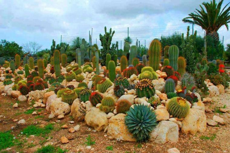 jardin de cactus cuarenta y nueve ideas de c mo elaborar. Black Bedroom Furniture Sets. Home Design Ideas