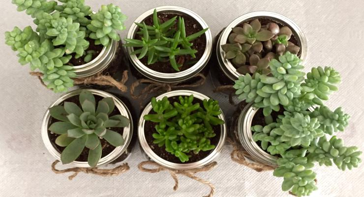 Plantas de interior ideas diy pr cticas y decorativas for Adornos con plantas en macetas
