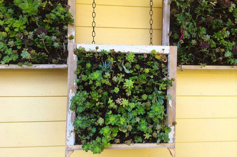 Jardines verticales ideas interesantes para el interior Tipos de plantas para jardines verticales