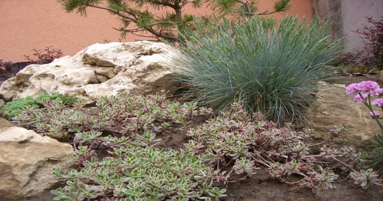 paisajes naturales rocallas plantas
