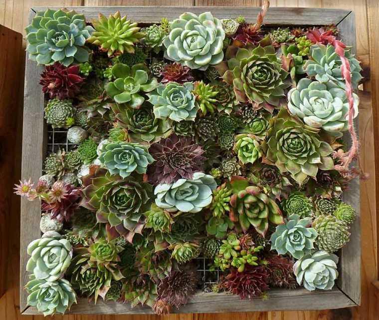 panel decorado plantas suculentas