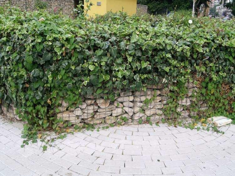 plantas enredaderas muro piedras