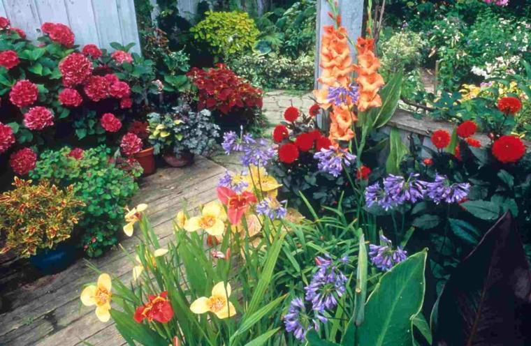 plants beautiful flowers month march