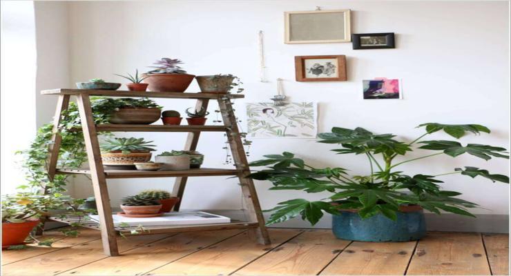 Plantas de interior ideas diy pr cticas y decorativas - Estantes para plantas ...