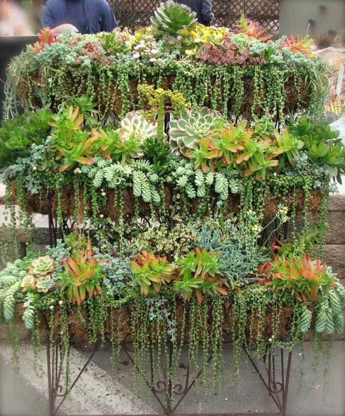 plantas suculentas decorado acero lineas
