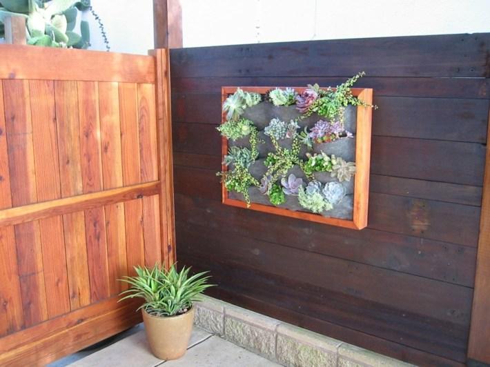 plantas suculentas decorado colores prados macetas