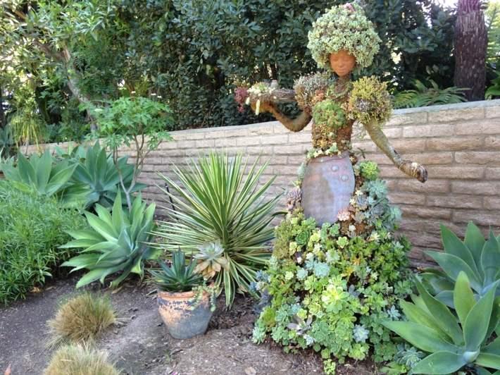 plantas suculentas decorado fondos flores muros