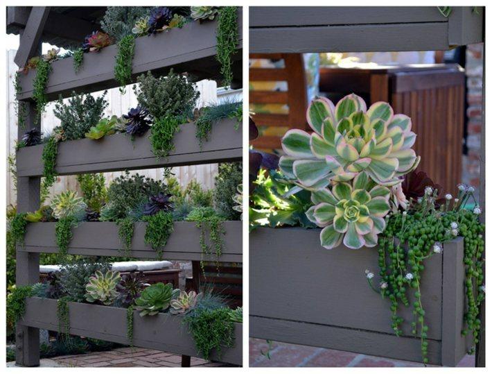 Plantas suculentas para transformar el exterior de la casa - Decoracion muros exteriores ...