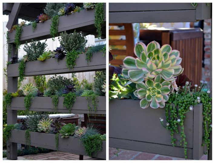 plantas suculentas decorado fondos muros ideas