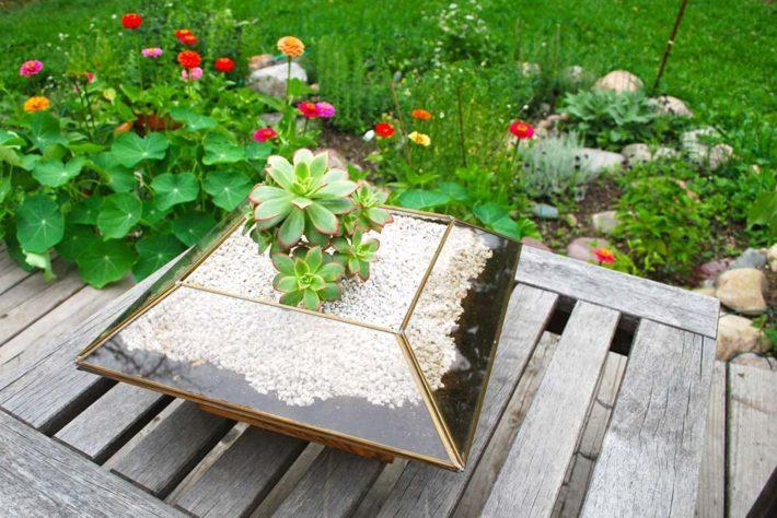 plantas suculentas decorado jardines acuario flores