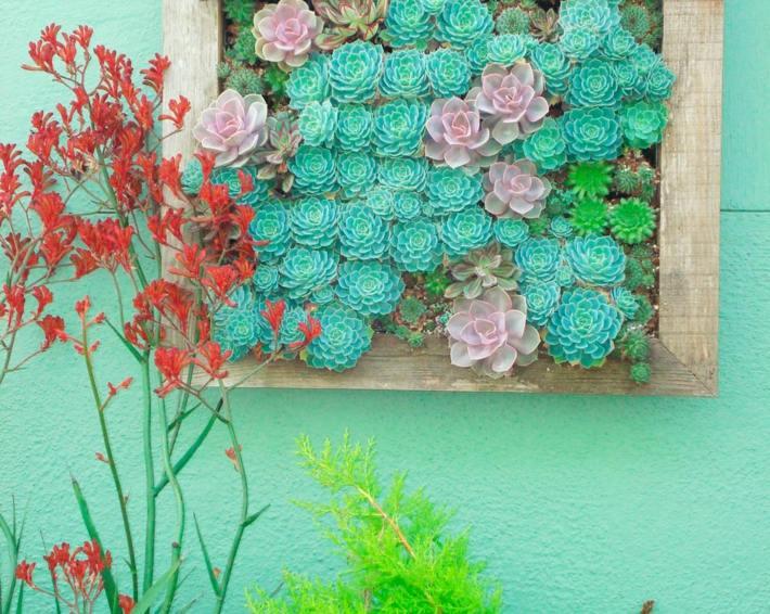plantas suculentas decorado jardines cerradas diy colores