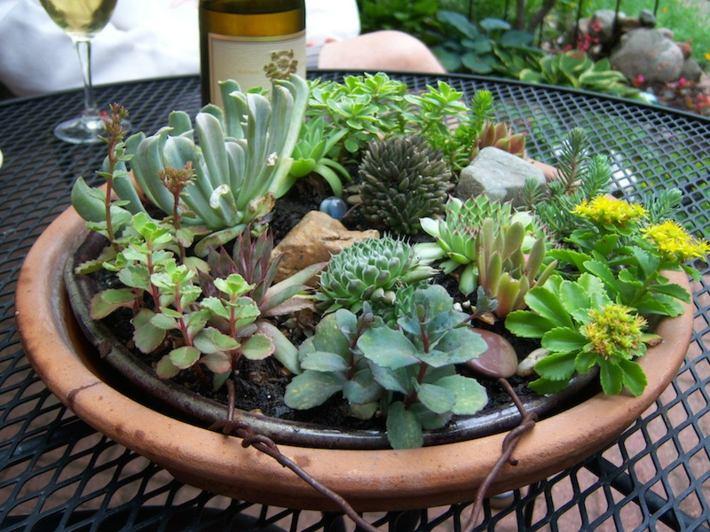 plantas suculentas decorado materiales copas