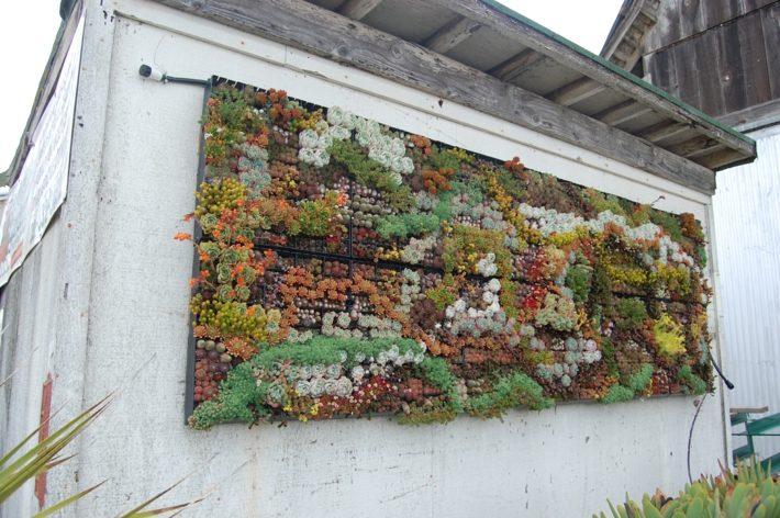 plantas suculentas decorado paredes detalles metales