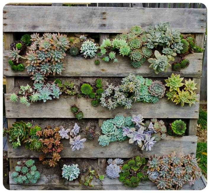 plantas suculentas decorado paredes madera