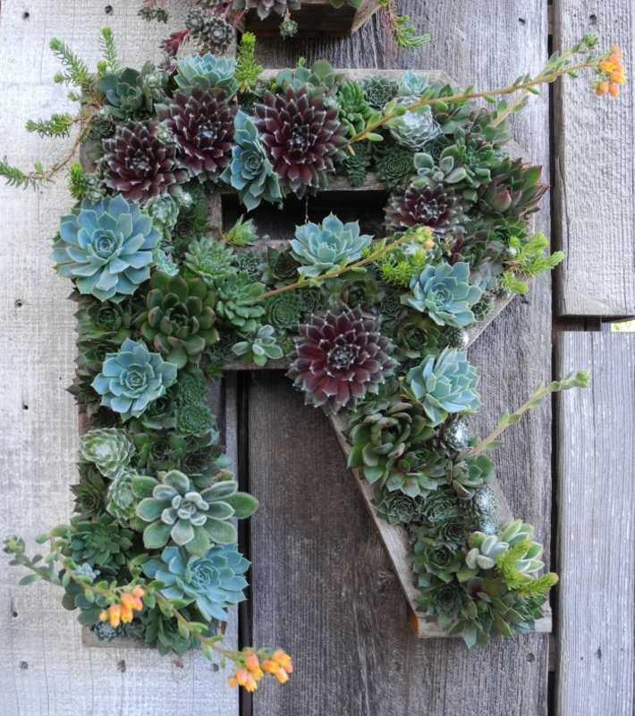 plantas suculentas decorado puentes letras
