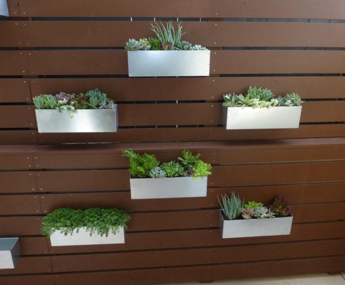 plantas suculentas decorado tendencias lineas